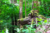 Tree root similar to animal — Stock Photo