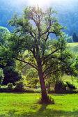 Beautiful evening trees highlighting — Stock Photo