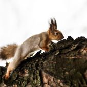Funny squirrel in the forest — Stock Photo