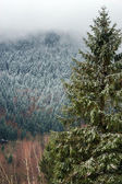 Beautiful landscape view of winter forest — Stock Photo