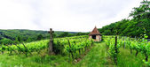 Wide panoramic view to Alsacevineyards, France — Stock Photo