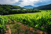 Thunder-storm weather over the vineyards — Stock Photo