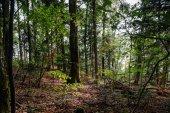 Forêt sauvage à l'intérieur de la vue, l'heure d'été — Photo