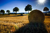 Beautiful yellow field with haystacks at sunset — Stock Photo