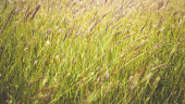 Grass close up in sunny weather, nature, bokeh. — Stock Photo