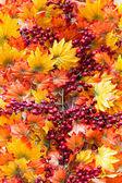 Creative composition decorative autumn orange and yellow leaves — Stock Photo