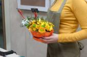 Florist at work holding composition of cut flowers — Stock Photo