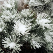 Pine needles and branches covered with snow — Stock Photo #59759951