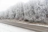 Winter landscape, forest near the road — Foto Stock
