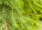 Gröna blad — Stockfoto