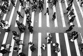 Zebra pedestrian walking through the streets — Stock Photo