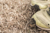 Running shoes on a green grass field — Stock Photo