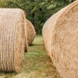 Round Bales — Stock Photo #57390697