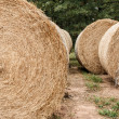 Hay Bales — Stock Photo #57390705