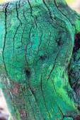 Old tree trunk stump colored paint — Fotografia Stock