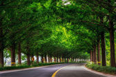 Metasequoia Road — Foto Stock