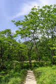 Lush forest with a hiking trail — Stock Photo
