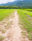 Small road to the field — Stock Photo