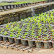 Young seedlings plants in tray — Stock Photo #59767475