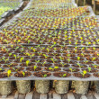 Young seedlings plants in tray — Stock Photo #59767883