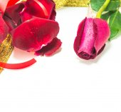 Red rose on white background, Valentines Day background — Stockfoto