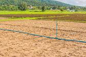 Beauty sunny day on the rice field — Stock Photo