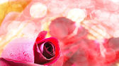 Red rose on white background, Valentines Day background — Stock Photo