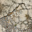 Image of small pebble rock on cracked cement ground — Stock Photo #68912049