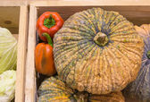 Pumpkin and pepper harvested products on wooden box. — Stock Photo