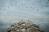 River rocks — Stock Photo