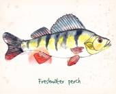 Hand-painted watercolor illustration of a fish - freshwater perch. Vectorized, on vintage background. — Stock Vector