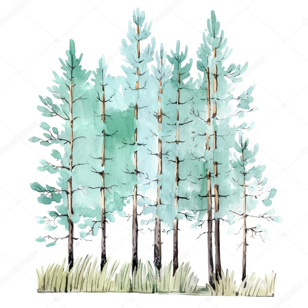 watercolor painting of pine tree wood stock vector pine tree clip art with halo pine tree clipart png