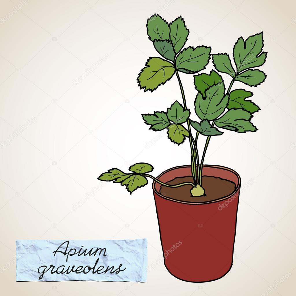 Plante verte en pot image vectorielle 63458507 for Plante verte