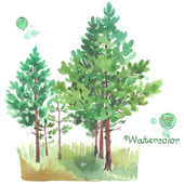 Young pine-tree forest — Stock Vector