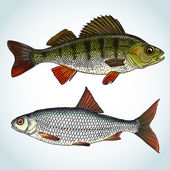 Realistic freshwater fishes — Stock Vector