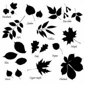 Set of leaves silhouettes — Stock Vector