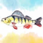 Watercolor freshwater perch — Stock Vector