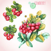 Watercolor cowberries with leaves — Stock Vector