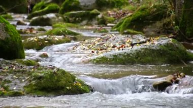 Winding Creek Cascades in Fall Racking Focus — Stock Video