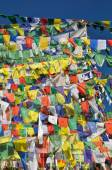 Buddhist prayer flags in  Dharamshala, India — Foto de Stock