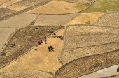 Ploughing fields in Nepal — Stock Photo
