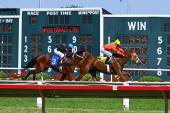 Race horses pass tote board — Foto de Stock