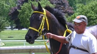Race Horse shows smile — Stock Video
