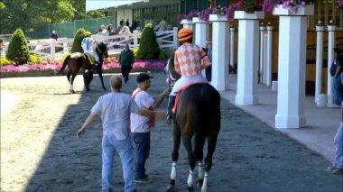 Woman jockey and race horse leave paddock — Stock Video