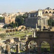 The Ancient Forum in Rome Italy — Stock Photo #55242765