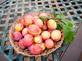 Plums from an English Garden — Stock Photo