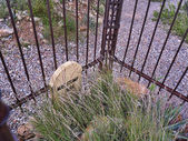 Boot Hill cemetery in Tombstone Arizona USA — Zdjęcie stockowe