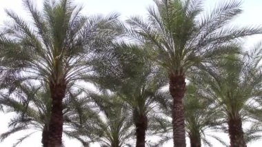 Swaying palm trees — Stock Video