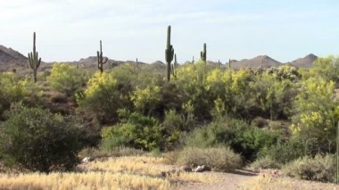 Superstition Mountains, Arizona — Stock Video