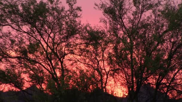 Palo Verde Tree silhouetted by a blazing sunset in the Superstition Mountains, Arizona — Vidéo